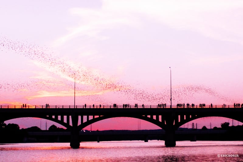 Bats over Congress Avenue Bridge in Austin, Texas | What to Do on South Congress